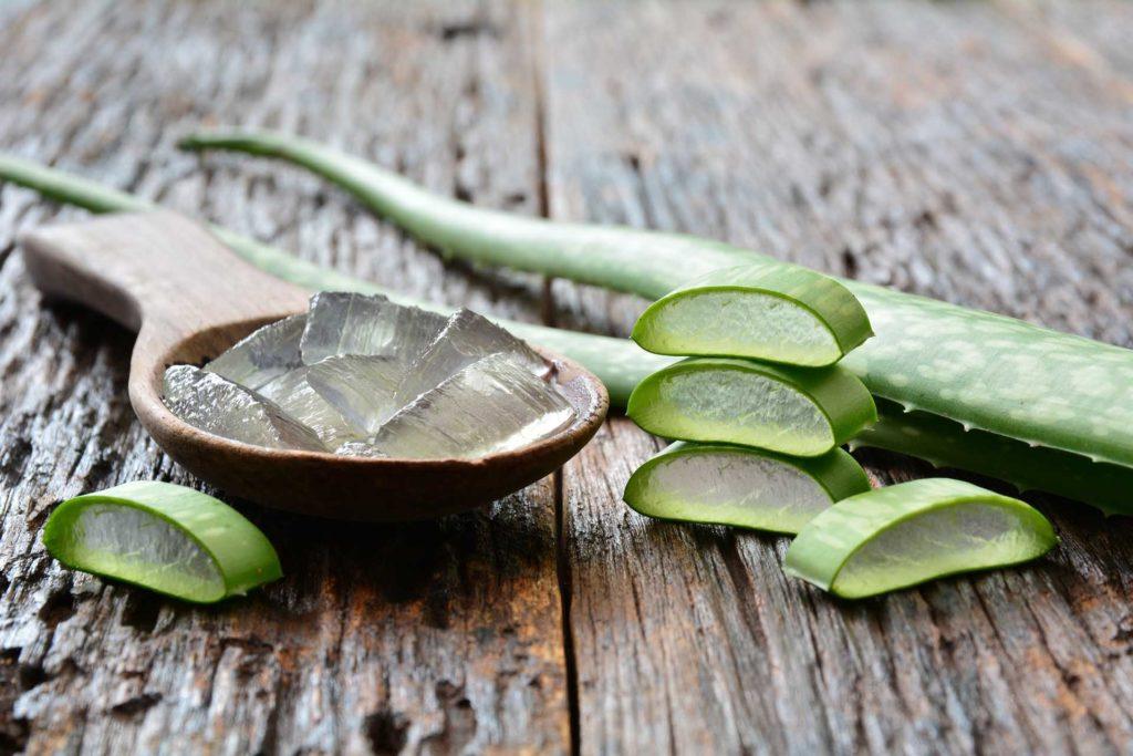 Aloe Vera - aufgeschnitten