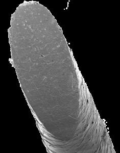 Haar unter dem Mikroskop - Calligraphy Cut