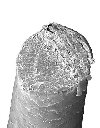 Haar unter dem Mikroskop - Scherenschnitt